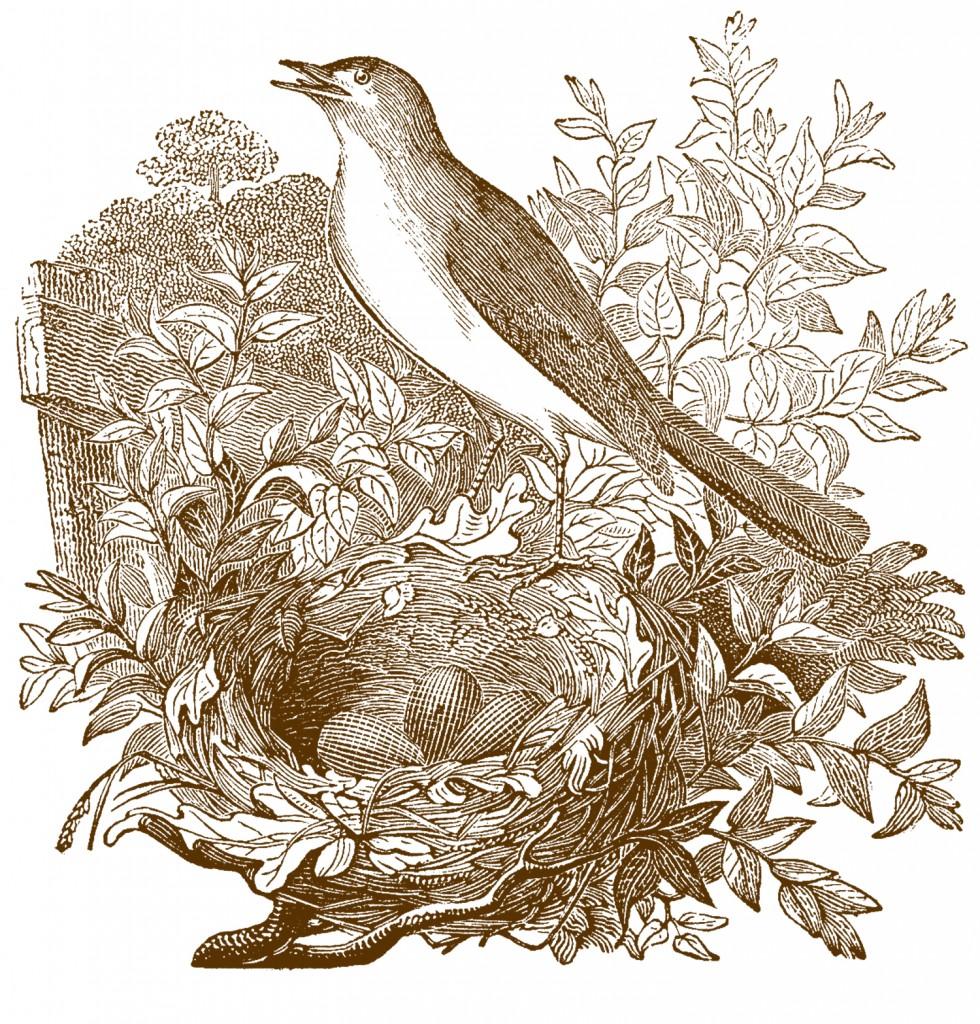 Free Vintage Nightingale Bird Images