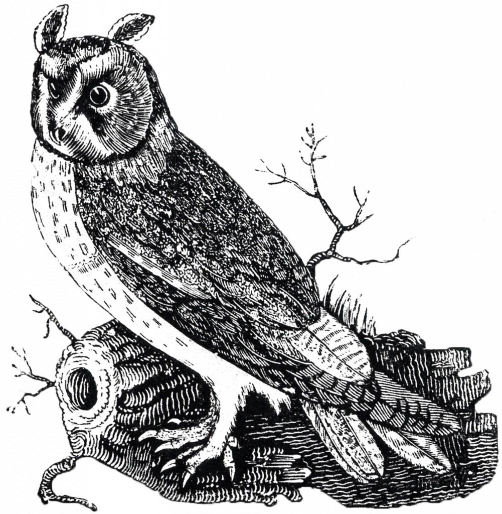 Free Vintage Owl Image
