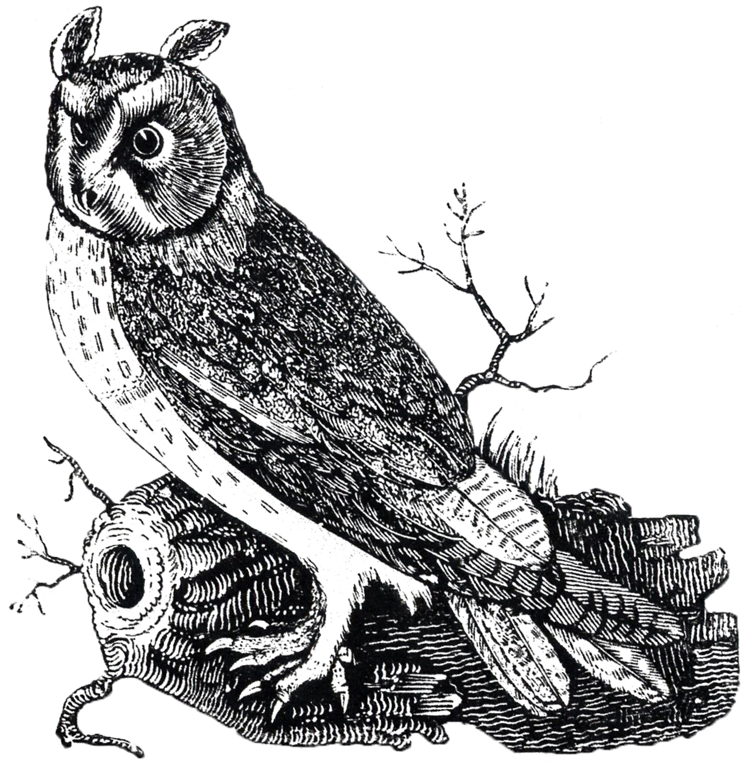 Free Vintage Owl Image - The Graphics Fairy