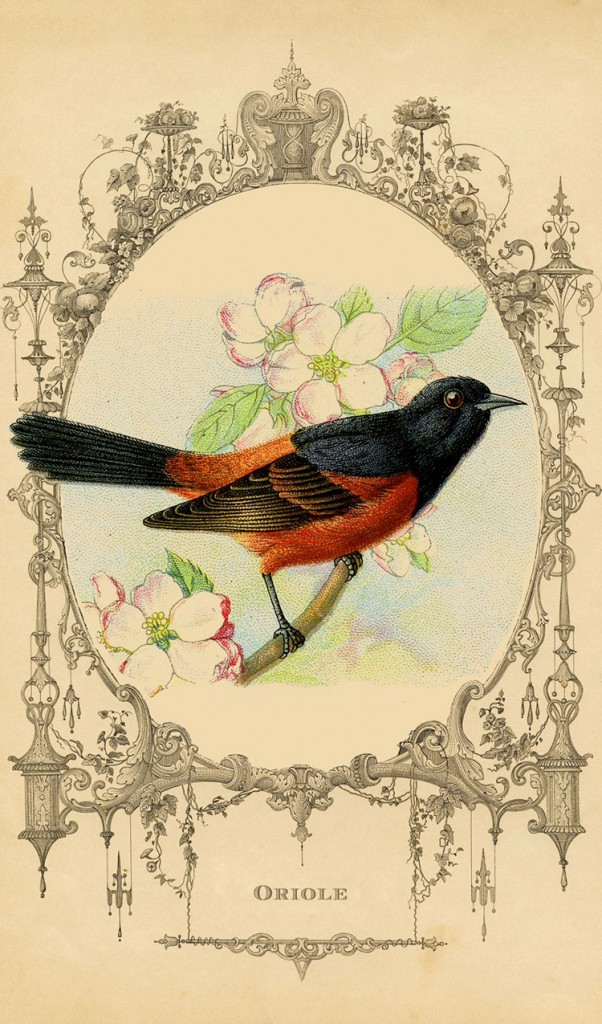 Oriole Bird Printable Graphics Fairy