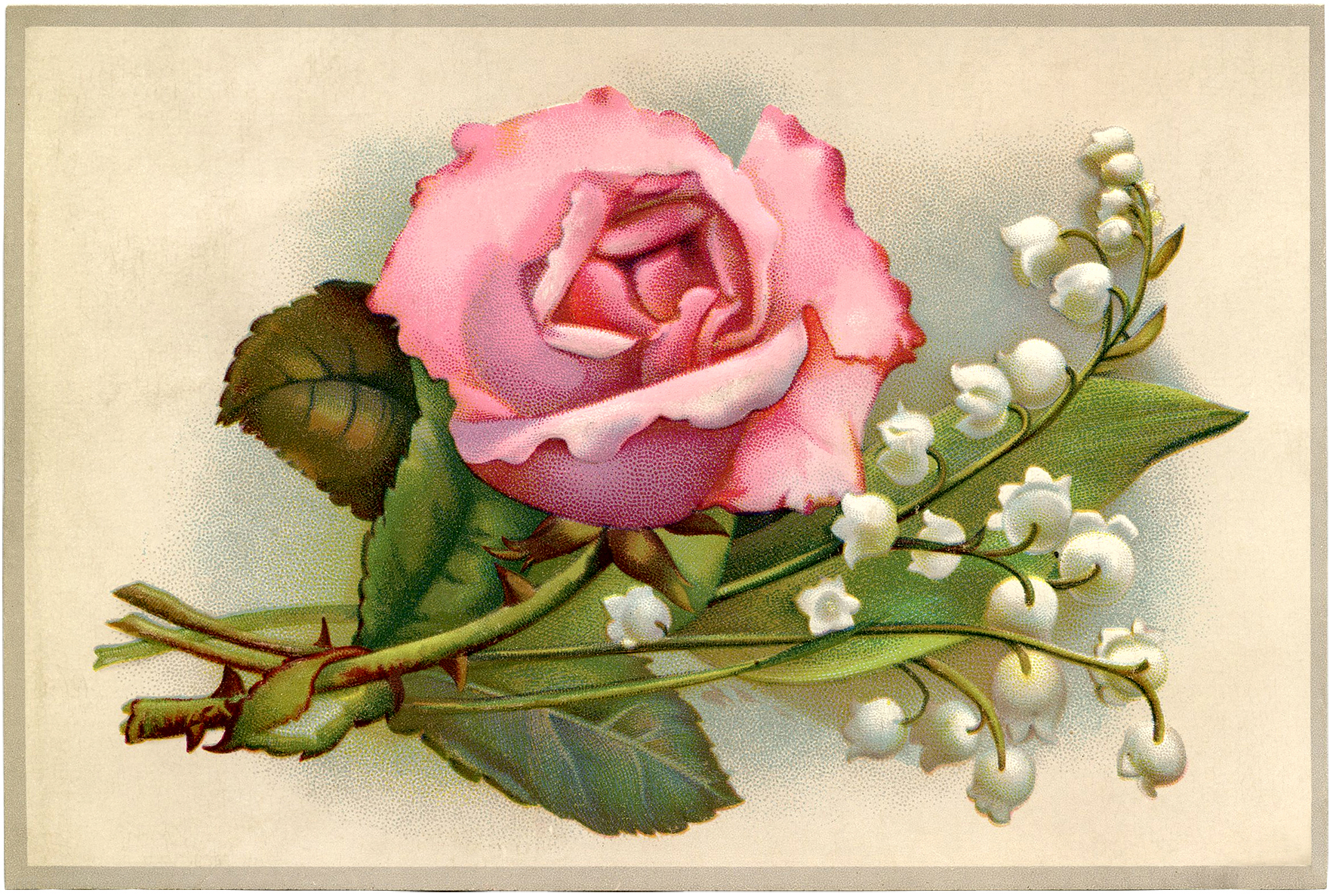 Rose Lily Valley Postcard GraphicsFairy
