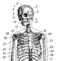 Vintage-Anatomy-Skeleton-Images-GraphicsFairy-th