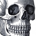 Vintage-Anatomy-Skull-Image-GraphicsFairy-thumb