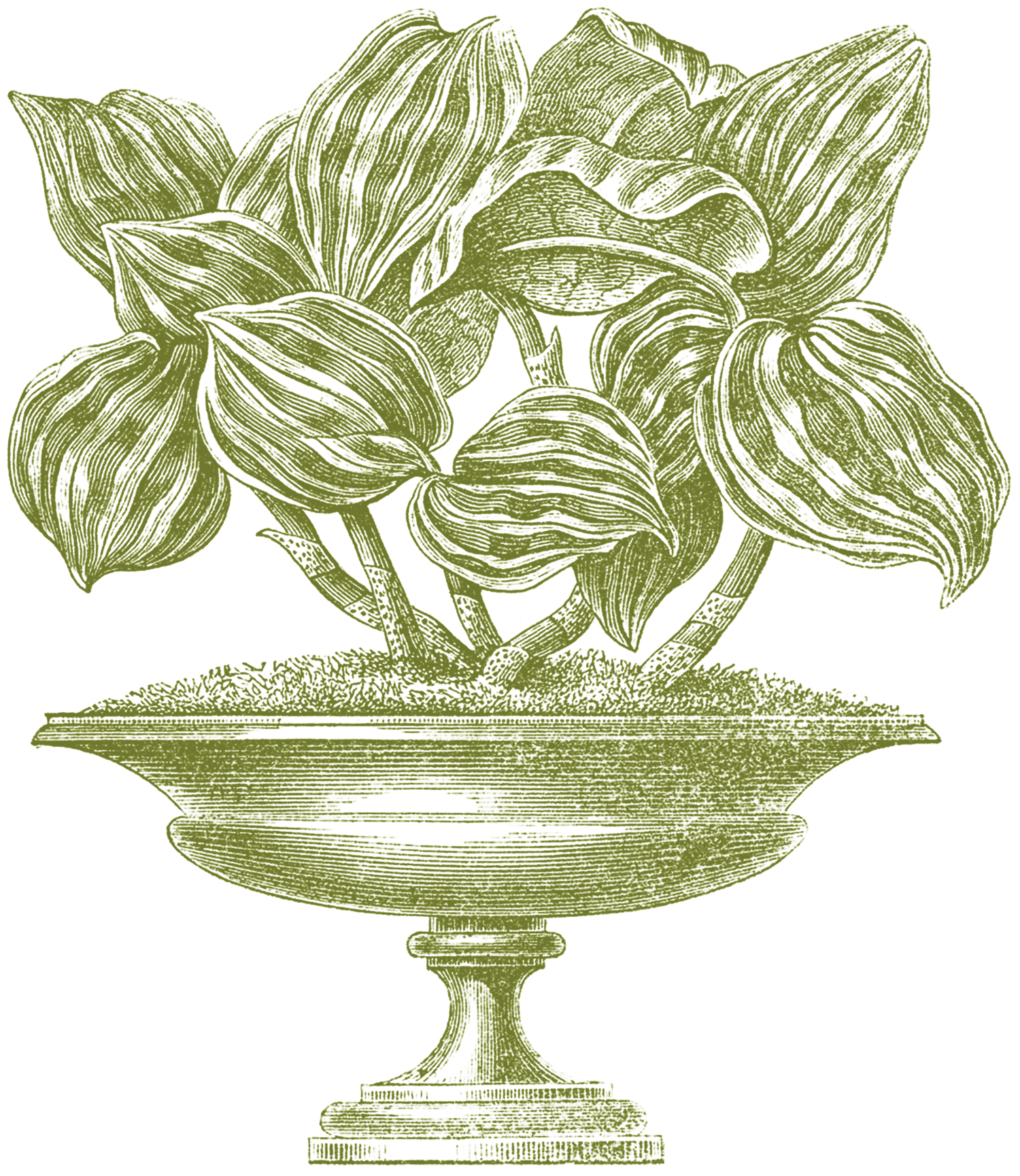 Vintage Garden Urn Image GraphicsFairy Green