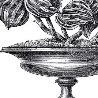 Vintage Garden Urn Images