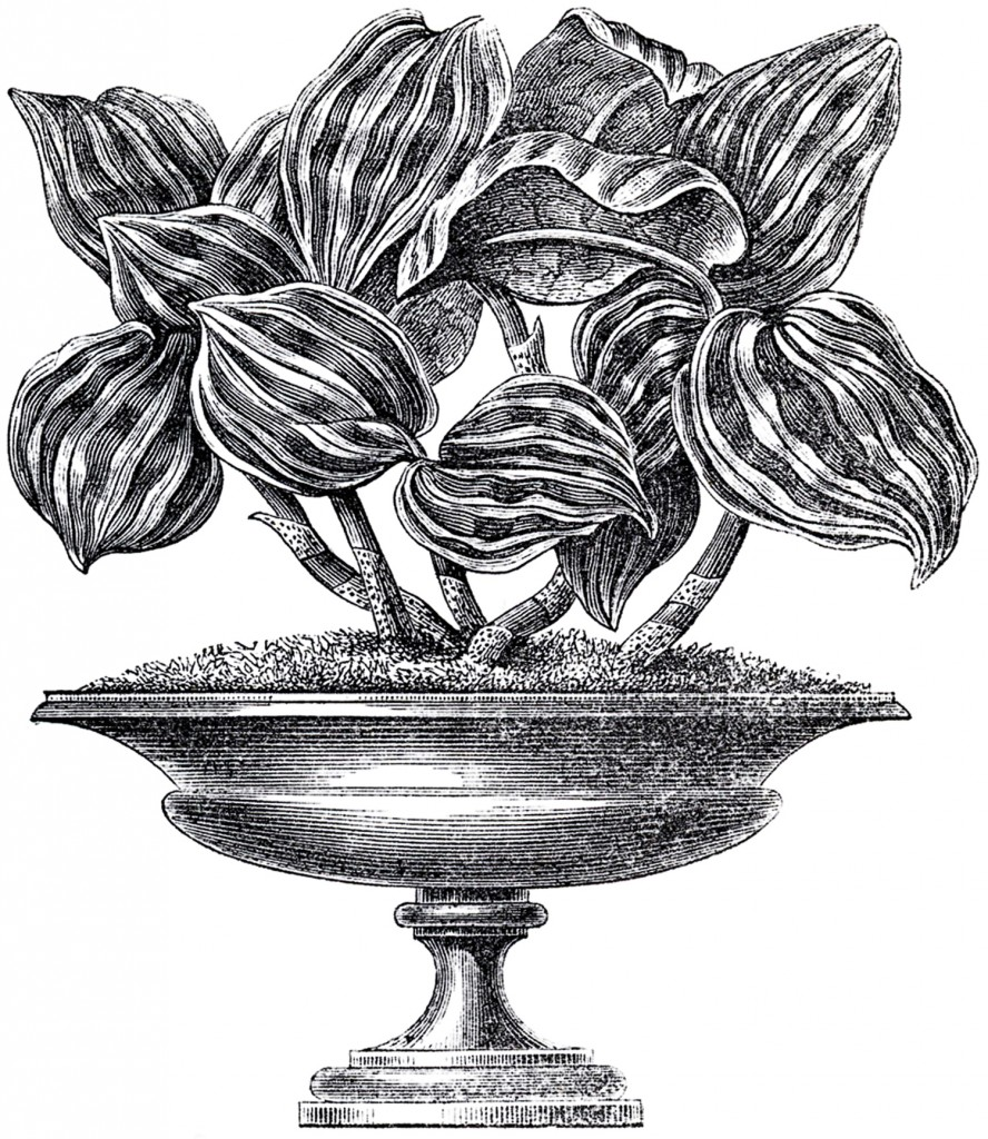 Vintage Garden Urn Image