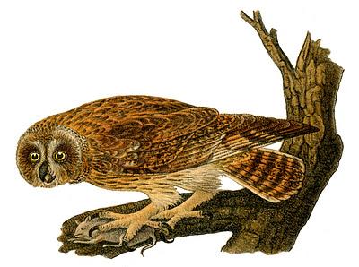 owl+vintage+image+graphicsfairy005c