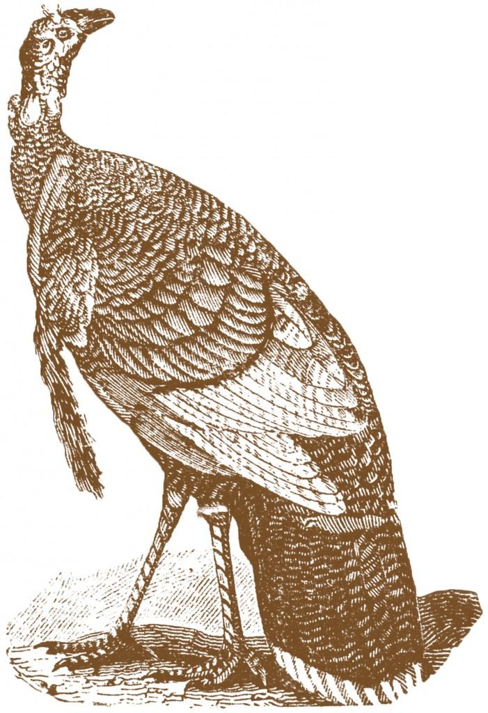 Antique Turkey Images The Graphics Fairy