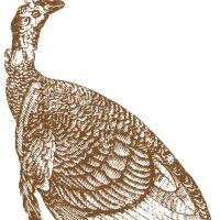 Antique-Turkey-Image-GraphicsFairy-thumb
