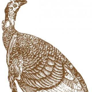 Antique Turkey Images