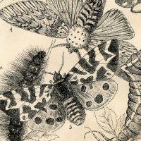 British-Butterflies-Printable-GraphicsFairy-thumb