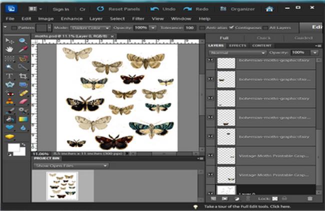 DIY Moth Specimen Shadow Box