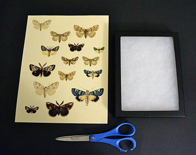 DIY Moth Specimen Shadow Box