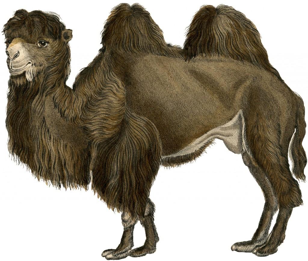 Vintage Camel 92