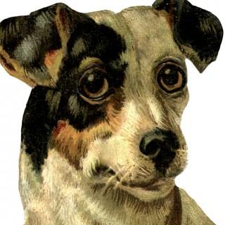 Cute Free Vintage Dog Image