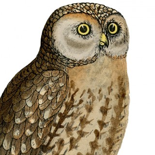 Cute Vintage Owl Printable