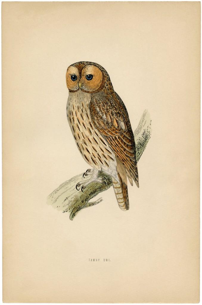 Vintage Printable Owl Images