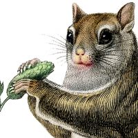 Squirrel holding a plant