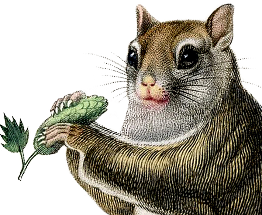 Cutest Vintage Squirrel Image Ever The Graphics Fairy