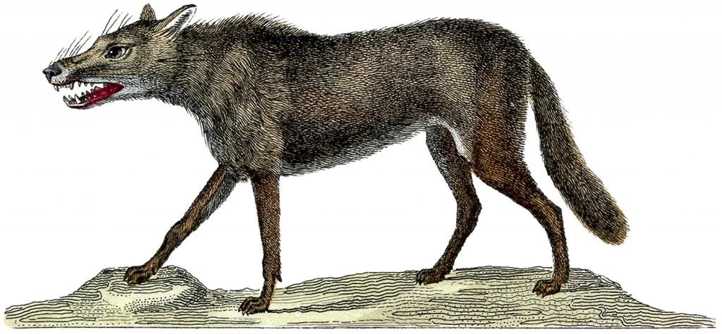 Vintage Wolf Image
