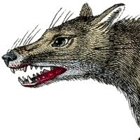 Vintage-Wolf-Image-GraphicsFairy-thumb