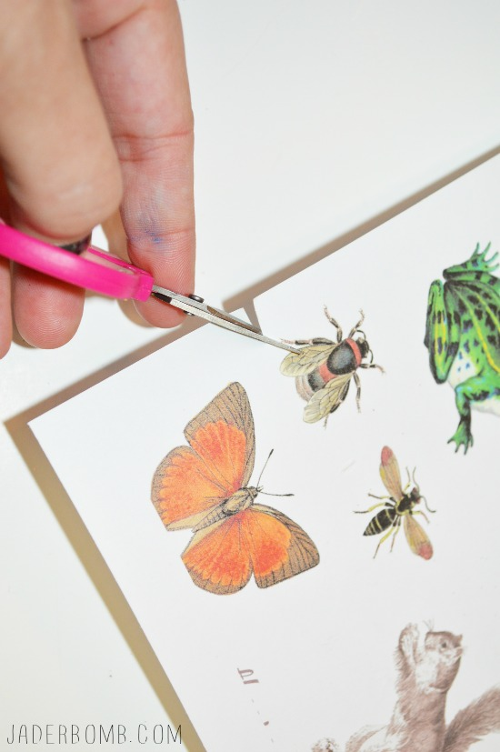 Decoupage insects