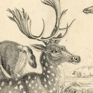 Free Deer Printable Graphics Fairy