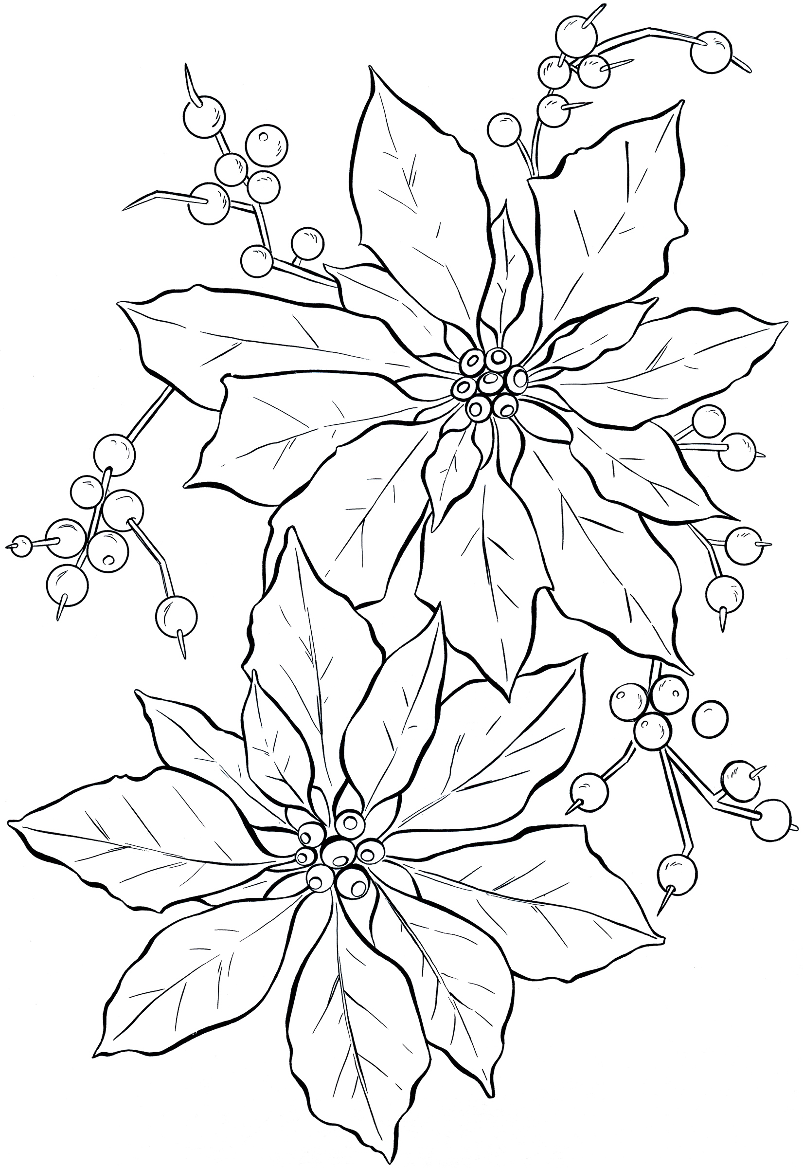 Line Art Xmas : Poinsettia line art christmas the graphics fairy