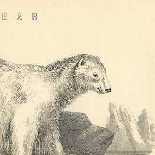 Polar Bear Printable