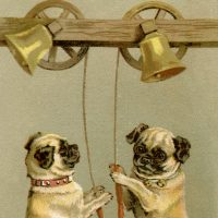 Pug Stock Illustration