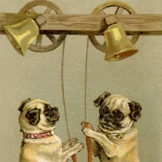 Pug Stock Illustration – Cute!