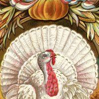 Thanksgiving Clip Art White Turkey