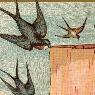 Victorian Trade Cards Swallows