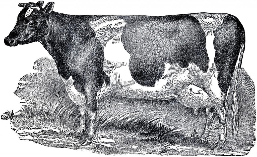 Vintage Farmhouse Image Cow