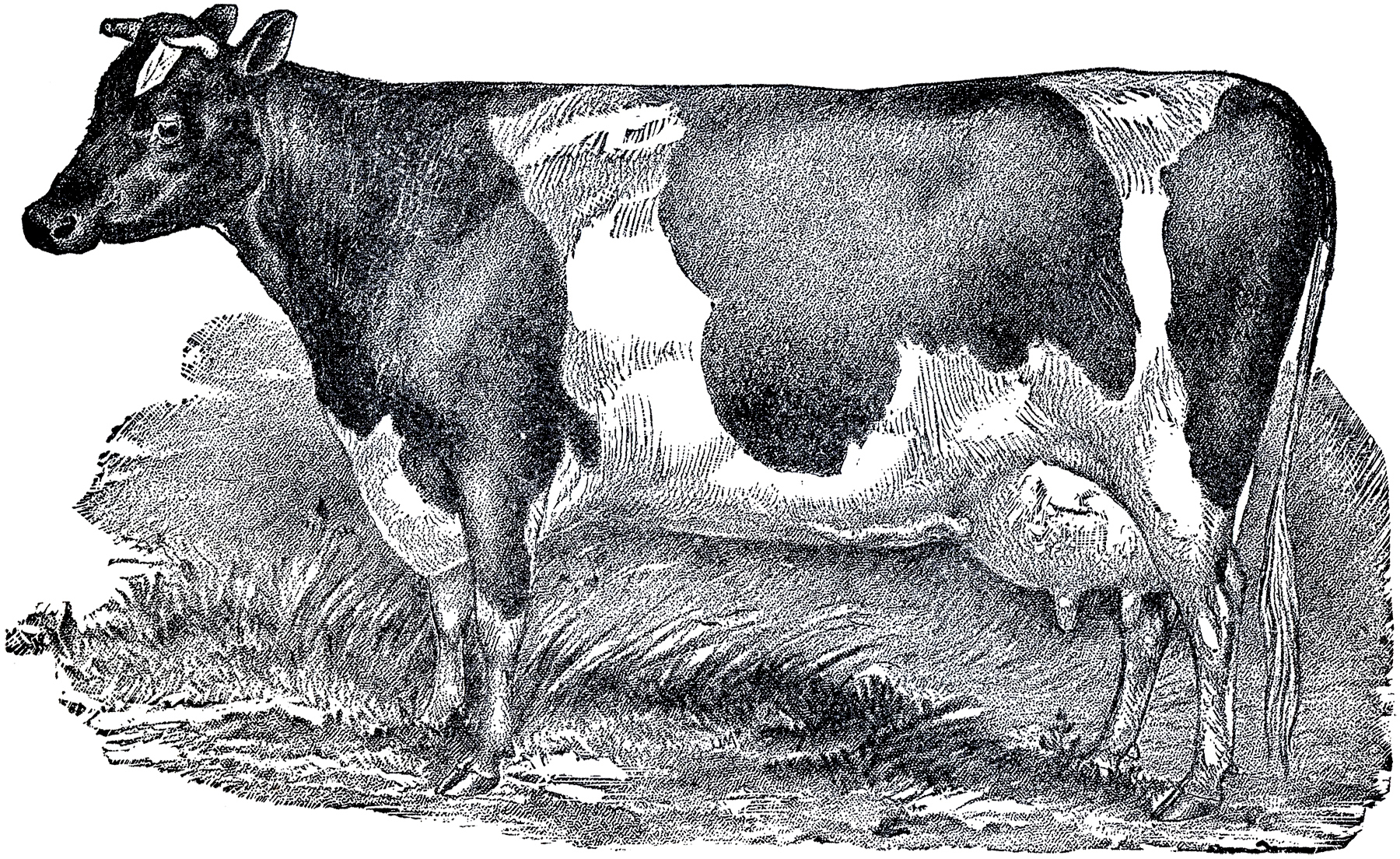 Vintage Farmhouse Image Cow