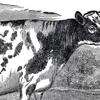 Free Vintage Cow Clip Art