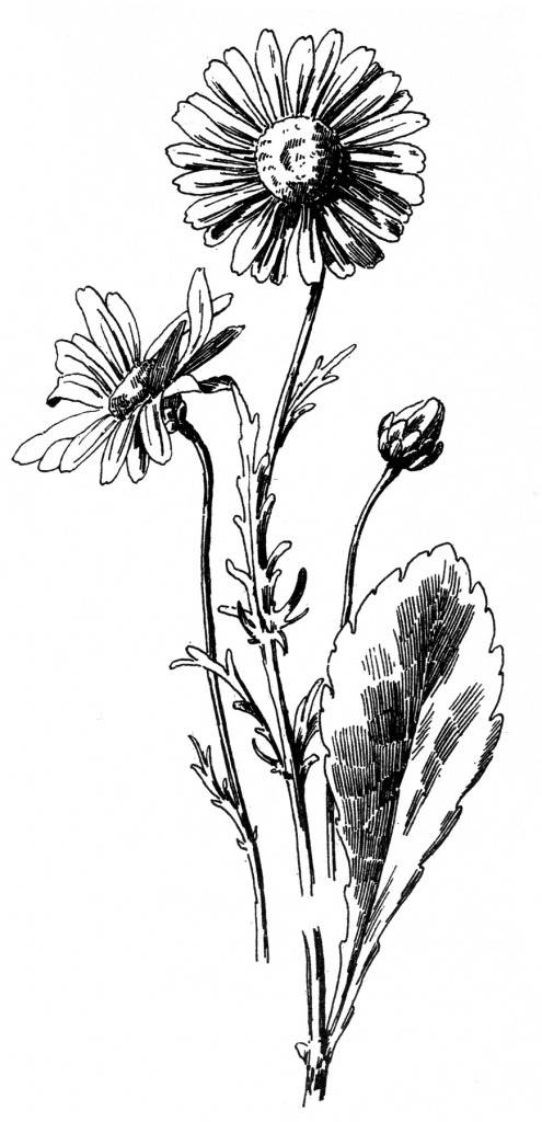 Free Drawing Black and White Flower