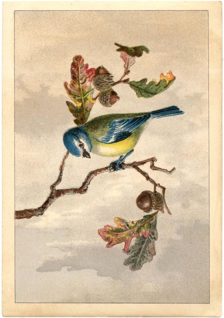 Free Graphics Vintage Roses: Free Vintage Bird Clip Art