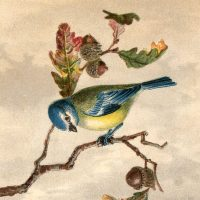 Free Vintage Bird Clip Art