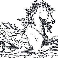 Mythical Sea Horse Image