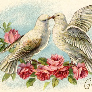 Old Valentine Picture – Doves and Roses