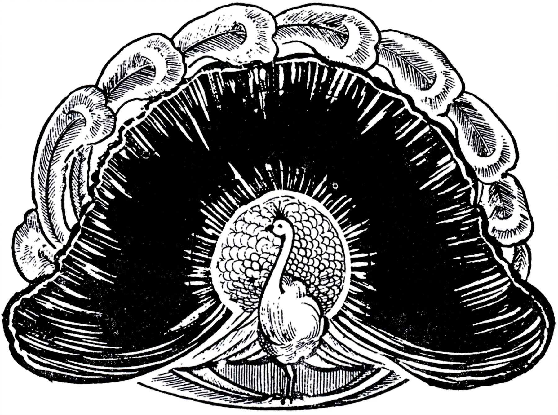Wonderful Peacock Image The Graphics Fairy