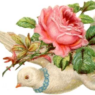 Valentine Scrap Dove Image