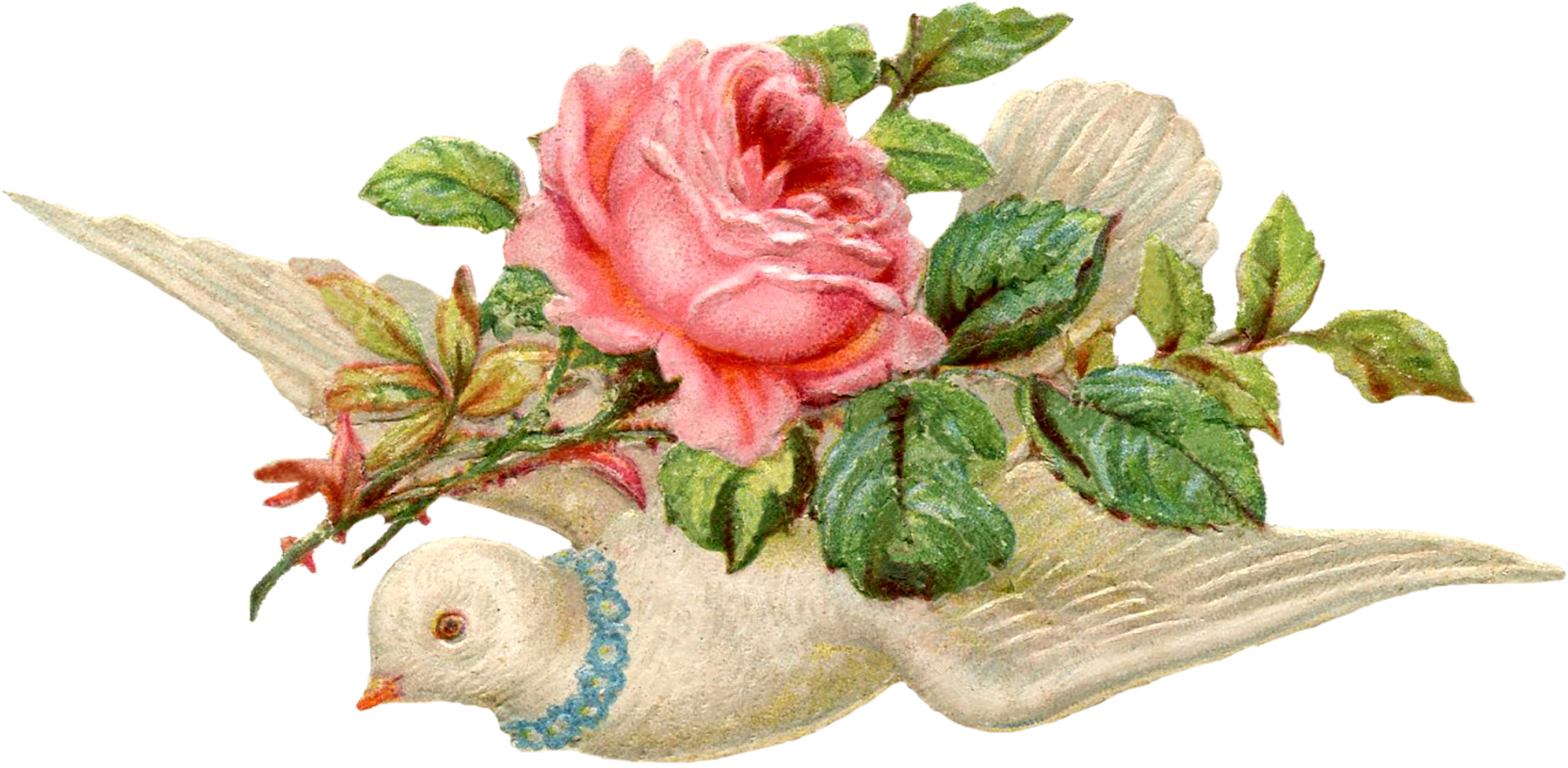 Valentine Scrap Dove Image The Graphics Fairy – Vintage Victorian Valentine Cards