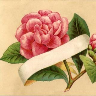 Flower Label Image