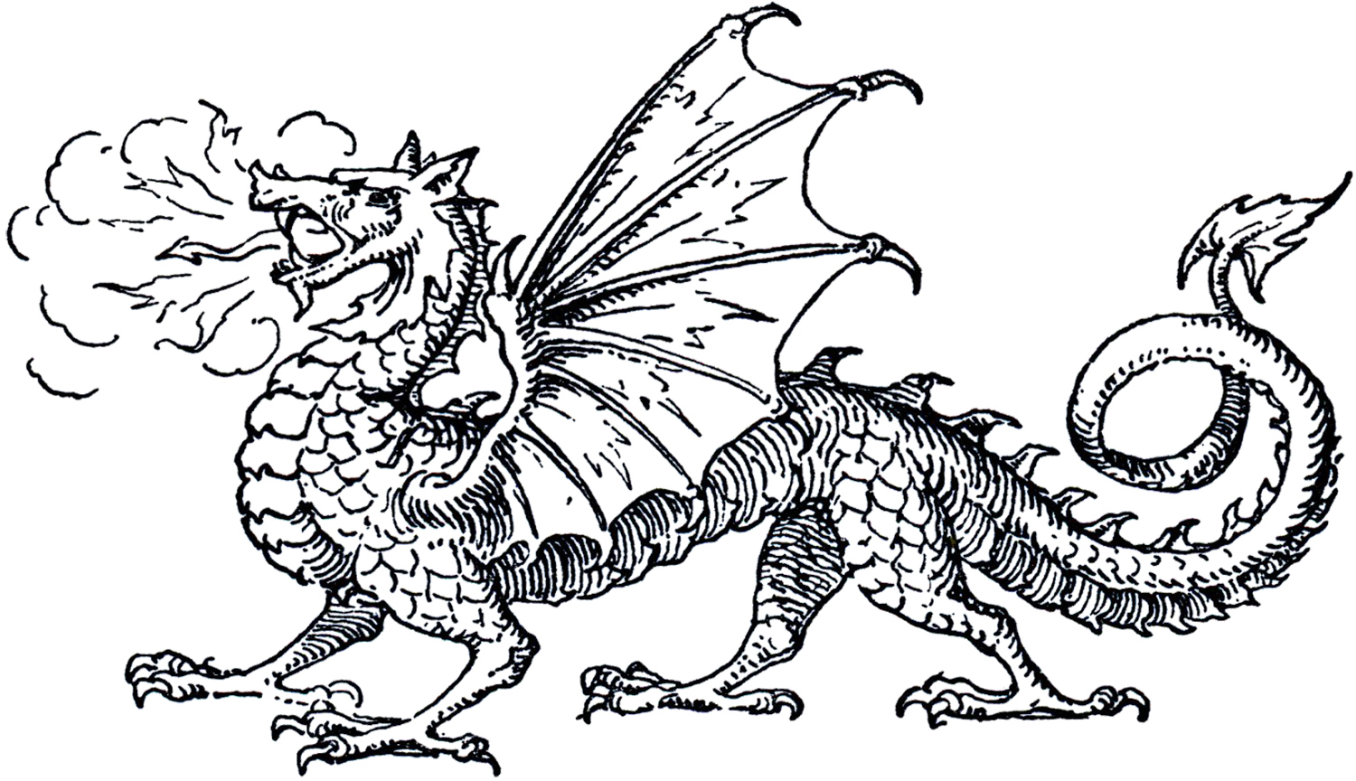 Line Art Images : Free dragon clip art the graphics fairy