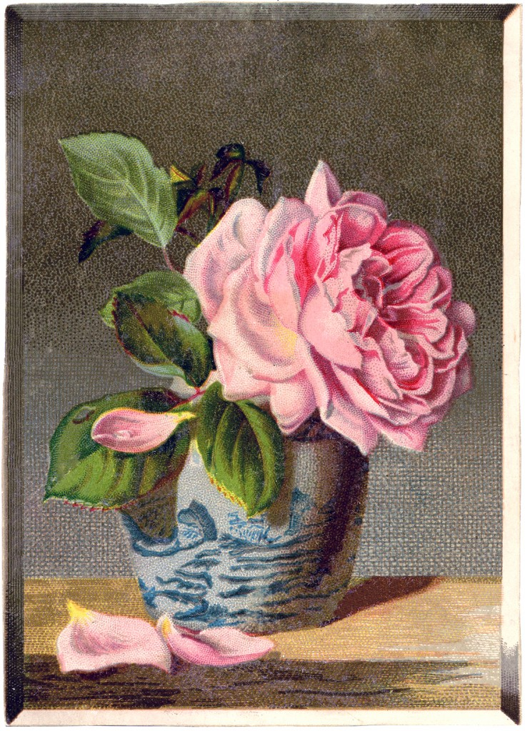 Rose Still Life Image