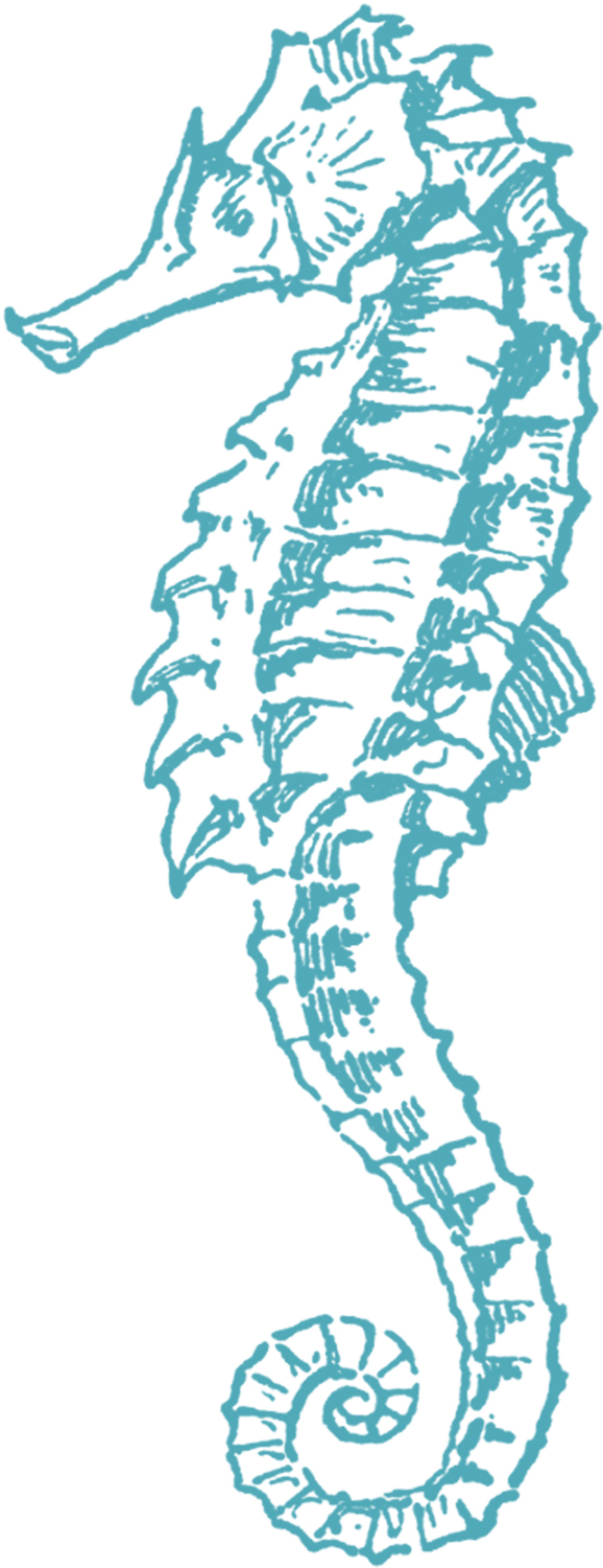 Clip Art Sea Horse Clip Art free sea horse clip art the graphics fairy art