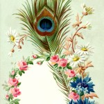 Vintage Peacock Feather Frame Image