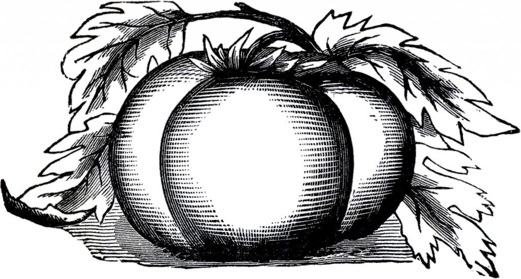 Vintage Tomato Clip Art
